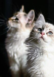 Cats expecting something good